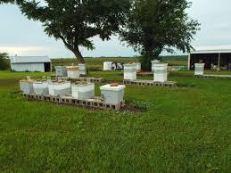 10-hives